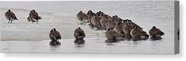 Canvas Print featuring the photograph Frozen Flock by Kevin Munro