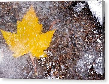 Canvas Print featuring the photograph Frozen Leaf by Scott Holmes