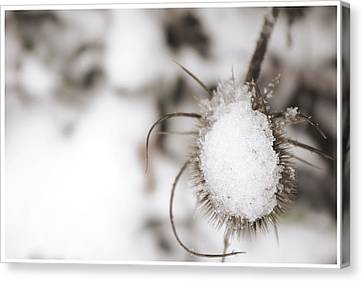 Canvas Print featuring the photograph Frozen Plant by Lenny Carter
