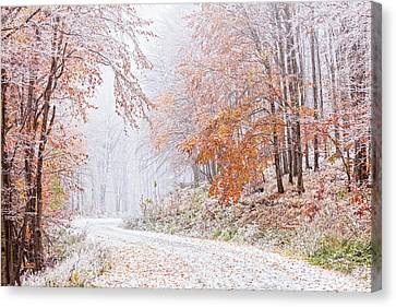 Frozen Road In Frosted Forest Canvas Print