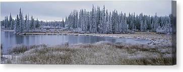 Frozen Swampland, Near 100 Mile House Canvas Print by David Nunuk