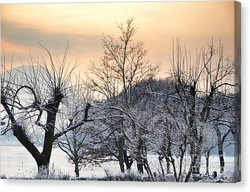 Frozen Trees Canvas Print by Mats Silvan