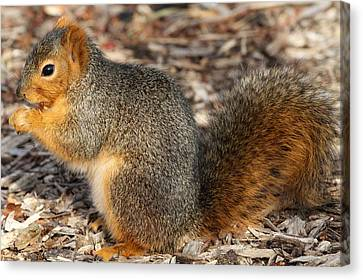 Canvas Print featuring the photograph Fruity Squirel by Elizabeth Winter
