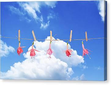 Fuchsia Blooms Canvas Print by Amanda Elwell