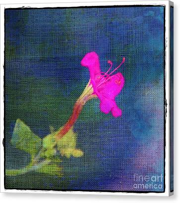 Fuchsia Flower Canvas Print by Judi Bagwell