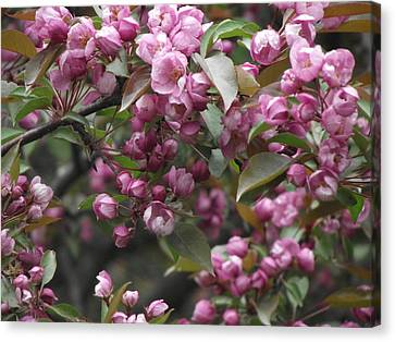 Full Blossom Canvas Print by Erika Betts