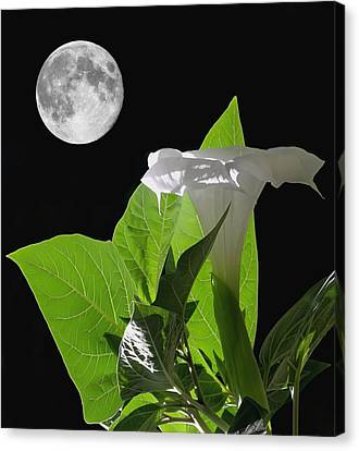 Full Moon Flower Canvas Print by Angie Vogel