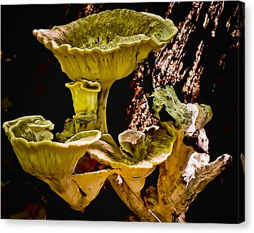 Fungus Among Us Canvas Print by Michael Putnam