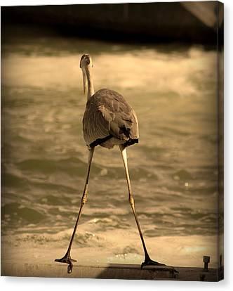 Funny Flamingo Canvas Print by Radoslav Nedelchev