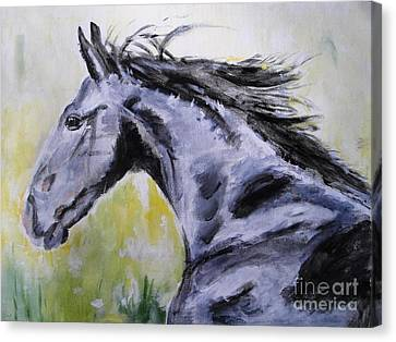Wild Horses Canvas Print - Fury by Judy Kay