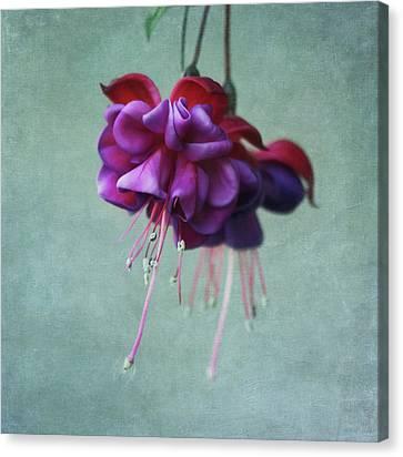 Fuschia Flower Canvas Print by Kim Hojnacki