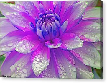 Fusia Flower Canvas Print by Tyra  OBryant
