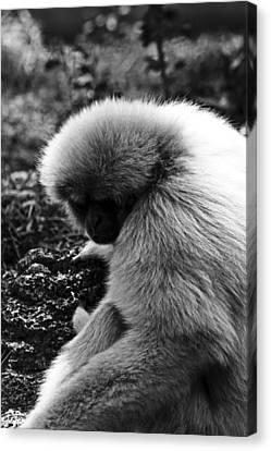 Fuzzy Monkey Canvas Print