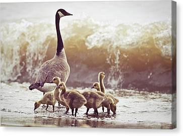 Flock Of Geese Canvas Print - Gaggle by Photogodfrey