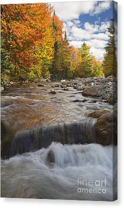 Gale River - White Mountains New Hampshire Canvas Print by Erin Paul Donovan