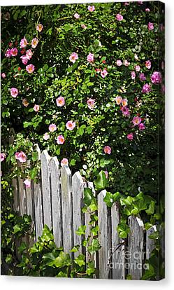 Garden Fence With Roses Canvas Print