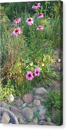 Garden Flowers And Rocks Canvas Print by Thelma Harcum