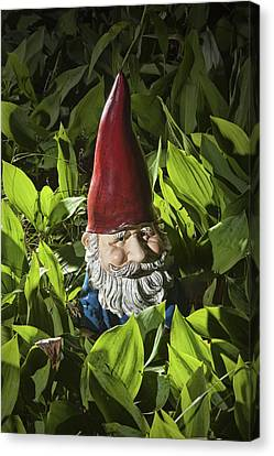 Garden Gnome No 0065 Canvas Print by Randall Nyhof