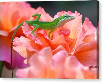 Garden Canvas Print by Kathy Gibbons