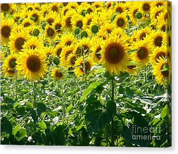 Garden Of Sunshine Canvas Print