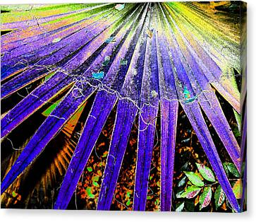 Garden Palm At Night Canvas Print
