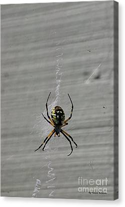 Canvas Print featuring the photograph Garden Spider by Tannis  Baldwin