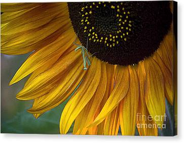 Garden's Friend Canvas Print by Jim and Emily Bush
