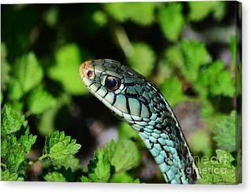 Garter Snake Profile Canvas Print