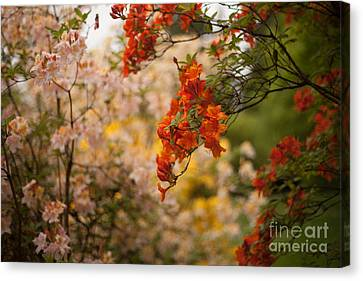 Gathering Of Radiance Canvas Print by Mike Reid