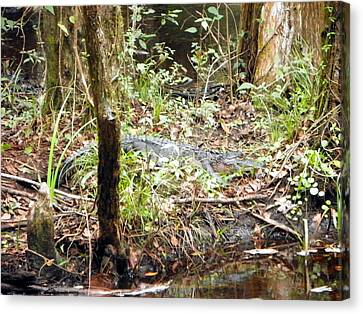Gator Swamp I Canvas Print by Sheri McLeroy