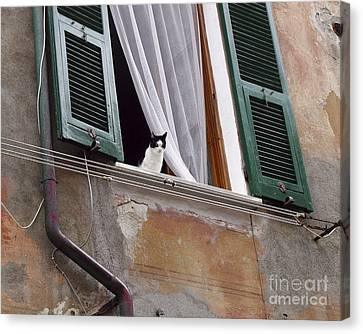 Canvas Print featuring the photograph Gatto by Leslie Hunziker