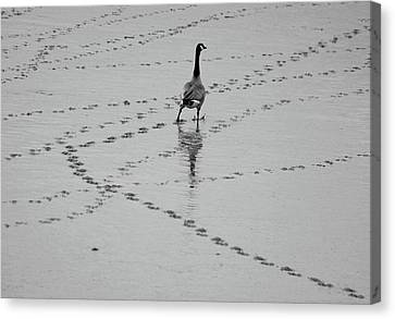 Geese Canvas Print by All copyrights reserved by Harris Hui
