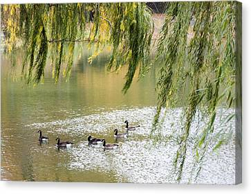 Geese In Central Park Canvas Print by Stacy Gold