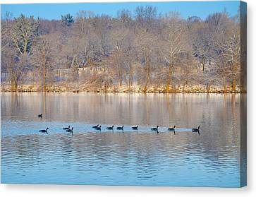 Geese In The Schuylkill River Canvas Print by Bill Cannon