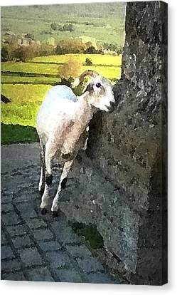 Briton Canvas Print - Gentle As A Lamb by Vicki Lea Eggen