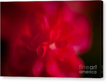 Gentle Softness Canvas Print by Venura Herath