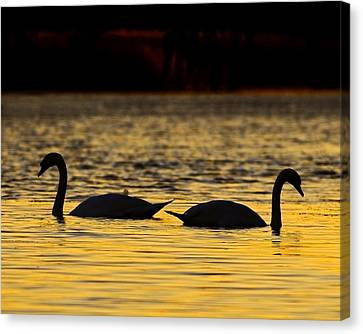 Gently Apart Canvas Print by Tony Beck