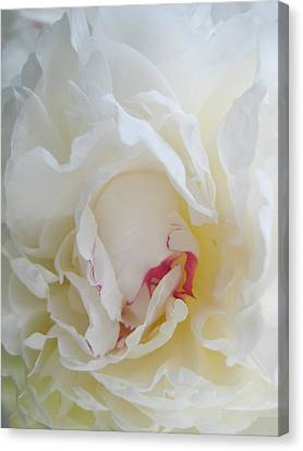Gently Unfolding Canvas Print by Shirley Sirois