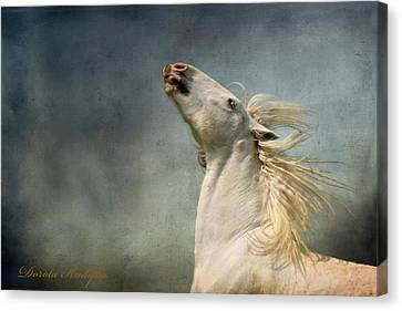 Draft Horse Canvas Print - Georgiano Cavalli by Dorota Kudyba