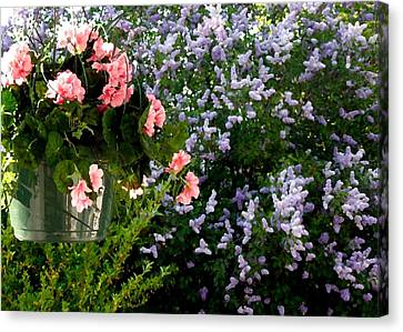 Peaches Canvas Print - Geranium And Lilac Painting by Will Borden