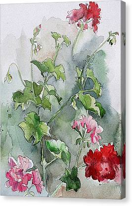 Geraniums Canvas Print by Stephanie Aarons