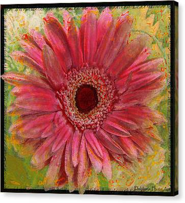 Gerber Photoart Canvas Print by Debbie Portwood