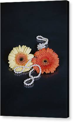 Gerberas With Pearls Canvas Print by Joana Kruse