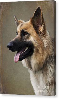 German Shepherd Dog Canvas Print by Ethiriel  Photography