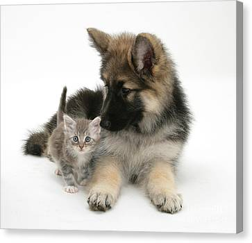 House Pet Canvas Print - German Shepherd Dog Pup With A Tabby by Mark Taylor