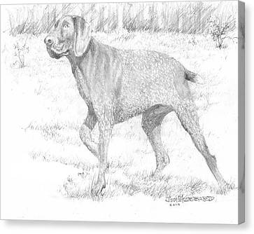 Canvas Print featuring the drawing German Shorthaired Pointer by Jim Hubbard