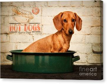 Get Your Hot Dogs Canvas Print by Susan Candelario