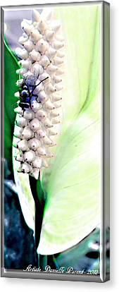 Get Your Own Flower Canvas Print by Danielle  Parent