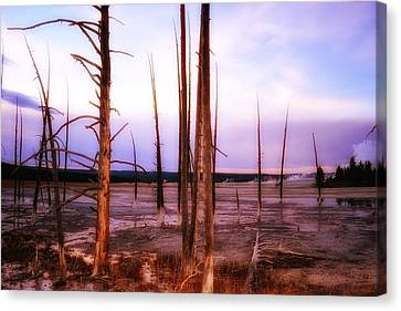 Canvas Print featuring the photograph Geyser Basin Trees by Kelly Reber
