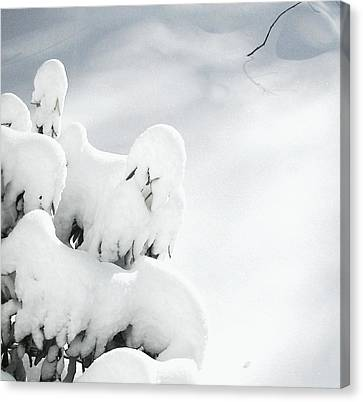 Canvas Print featuring the photograph Ghostly Snow Covered Bush by Pamela Hyde Wilson